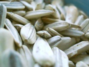 [Image: salty-seeds-2-1538609-640x480-300x225.jpg]